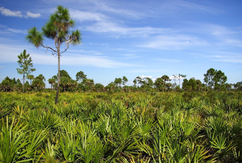 an analysis of everglades